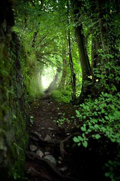 ... its cool and damp, but it would be home. places to hide.