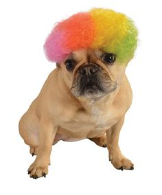 Short 60s 70s Hippie Clown Rainbow Afro For Pet Dog >>> Click on the image for additional details.