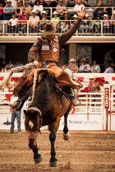 Cody DeMoss, Saddle Bronc #equine #equestrian