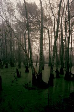Mississippi swamp. #swamp #thesouth