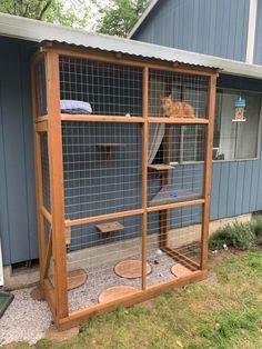 Diy Cat Enclosure, Outdoor Cat Enclosure, Cat Fence, Cat House Diy, Cat Run, Cat Window, Cat Playground, Cat Garden, Outdoor Cats
