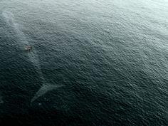 #whale #ocean #sea #blue