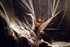 Kimie Nakano, 'Vertical Road', for Akram Khan at Sadler's Wells, photo Laurent Ziegler