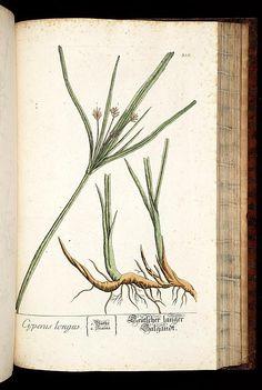 Herbarium Blackwellianum emendatum et auctum, i...