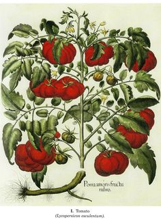 : Besler's Book of Flowers and Plants: 73 Full-Color Plates from Hortus Eystettensis, 1613