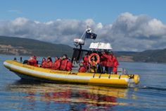 Whale Watching Zodiac Tours - a great way to see different species of whales up close. If you are staying in Quebec city they have a coach bus that will bring you up to Tadoussac.