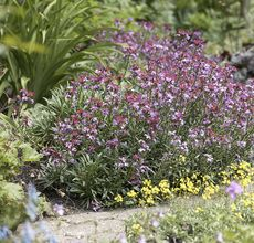 Wallflower pruning made easy