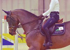 horsep0rn:  Horse love (by Francesca Favaretto)
