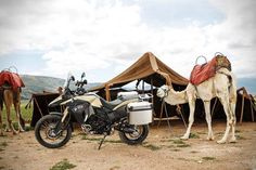 """2013 BMW F 800 GS Adventure. Abdul had invited Hans to stop for a drink, albeit with ulterior motives. """"Would his exalted self trade his two wheeled machine for this rare and superb white camel?"""" """"I don't think so"""", Hans replied. """"For two magnificent camels?"""" Abdul persisted. """"Not today"""" said Hans."""