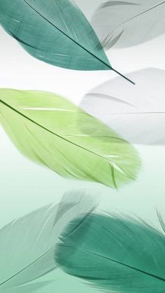Feather Wallpaper, Flower Phone Wallpaper, Green Wallpaper, Cute Wallpaper Backgrounds, Wallpaper Iphone Cute, Pretty Wallpapers, Cellphone Wallpaper, Colorful Wallpaper, Nature Wallpaper