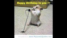 las mañanitas gracioso Music Publishing, Happy Birthday, Youtube, Animals, Showers, Hilarious Animals, Funny, Happy Brithday, Animales