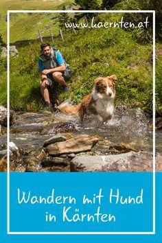 Hier findest du die besten Ausflugstipps für deinen Urlaub mit Hund in Österreich sowie die schönsten Wanderungen mit Hund in Kärnten. Dogs, Animals, Destinations, Pet Dogs, Viajes, Tips, Animales, Animaux, Doggies