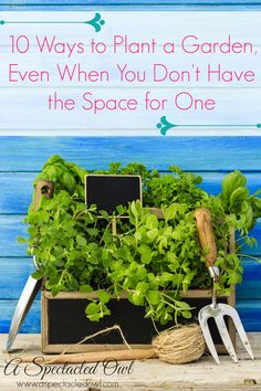 10 Ways to Plant a Garden, Even When You Don't Have the Space for One #RaisingGoodApples AD