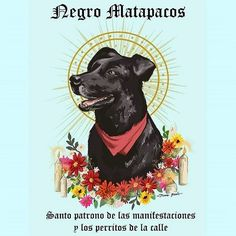 "kropotkindersurprise: "" kropotkindersurprise: ""August 26 2017 - Some sad news, Negro Matapacos (Black Copkiller), Revolutionary Chilean riot dog, friend to worker and student alike, has sadly passed. Dog Logo Design, Street Dogs, Patron Saints, Post Punk, Paint Splatter, Man Humor, Fantasy Creatures, How To Fall Asleep, Chile"