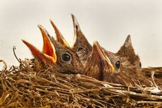 Did you feel the nesting instinct? As someone who is naturally messy I've been waiting for it to arrive! I spoke to lots of mums about their experiences - read about them here: http://www.riversidehypnobirthing.co.uk/nesting-instinct/