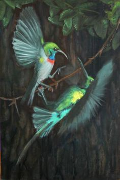 Sunbird Squabble
