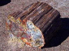 Petrified wood log at Petrified Forest National Park AZ Petrified Wood Arizona State Fossil Crystals And Gemstones, Stones And Crystals, Healing Crystals, Gem Stones, Aquarium Rocks, Gem Hunt, Petrified Forest National Park, Rock Hunting, Oregon Washington