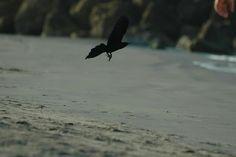 Maria mulata en playa del caribe