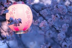 """We""""ll light up the pink lanterns tonight - its spring after all! Chinoiserie, Japan Landscape, Chinese Lanterns, Paper Lanterns, Pink Lanterns, Japanese Culture, Historical Sites, Geisha, Light Up"""