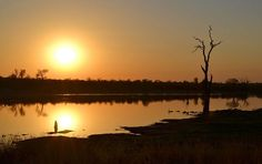 Kruger National Park, Places Ive Been, South Africa, Around The Worlds, Bird, Sunset, Country, Night, Travel