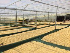 We're bringing you #farmtocup coffee: Costa Rica (Chirripo Los Crestones)
