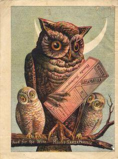 sasparilla + owls