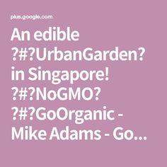 An edible #UrbanGarden in Singapore! #NoGMO #GoOrganic - Mike Adams - Google+