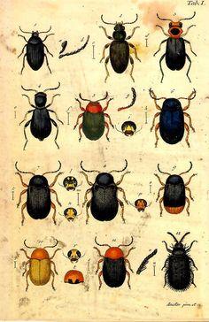 Vintag science poster de bugs.