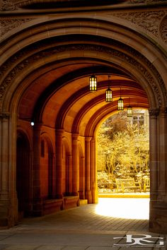 Yale University, New Haven, Connecticut . New Haven Yale, New Haven Connecticut, Dream School, Garden Arches, College Campus, Scenic Photography, Vintage Travel Posters, Backyard Landscaping, New England