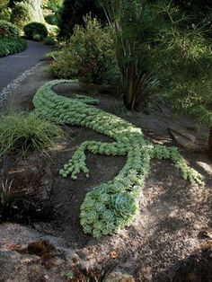 A Succulent Sensation | May 2014 eNewsletter Hundreds of Echeveria 'Imbricata' were used to create this giant lizard sculpture, perfectly placed on a slightly mounded berm for better drainage.: