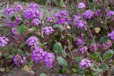 wildflowers | Deborah Small's Ethnobotany Blog