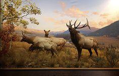 Dioramas at the Natural History Museum of America