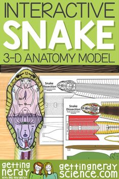 Life science and biology resources for class or homeschool. Engage students with interactive notebooks, paper dissection models, full lessons and more! Biology Lessons, Science Biology, Science Lessons, Teaching Science, Science Education, Life Science, Science Experiments, Veterinary Studies, Veterinary Medicine