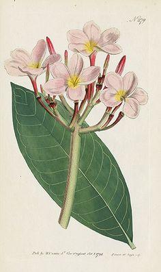Jewels from Curtis Botanical Magazine