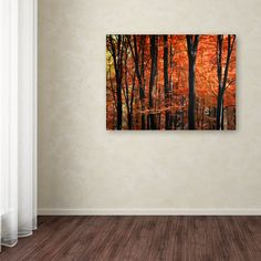 Indisputable Truth by Philippe Sainte-Laudy Photographic Print on Wrapped Canvas