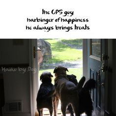 the UPS guy harbinger of happiness he brings us treats  #dogs #HaikuByDog