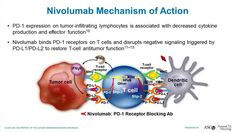 nivolumab mechanism of action in cancer treatment. Checkpoint inhibitors are known to cause immune related adverse events, trigger autoimmunity