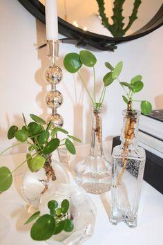 elefantöron Best Indoor Plants, Indoor Garden, Water Plants, Water Garden, Welcome To My House, Tropical Decor, Green Plants, Colorful Flowers, Houseplants