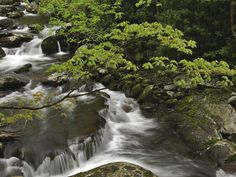 Great Smoky Mountains National Park | Stream, Great Smoky Mountains National Park, Tennessee
