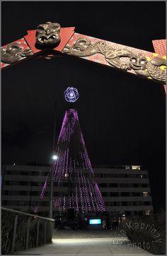 Christmas in Wellington New Zealand