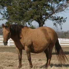 Use these tips to get your mare in foal without breaking the bank.