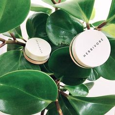 If Only Lip Conditioners Grew On Trees Joanaponder Lipconditioner Lipbalm