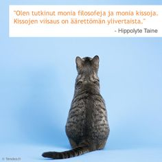 """""""Olen tutkinut monia filosofeja ja monia kissoja. Kissojen viisaus on äärettömän ylivertaista"""" #kissa #kissat #cats #aforismi #sananlasku"""
