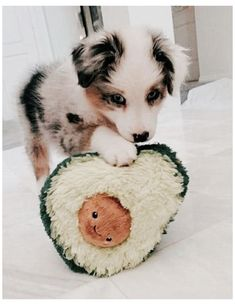 Cute Wild Animals, Baby Animals Super Cute, Cute Baby Dogs, Baby Animals Pictures, Cute Funny Dogs, Cute Animal Photos, Cute Little Animals, Cute Animal Pictures, Cute Funny Animals