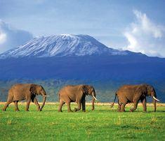 Resultado de imagen de fondo paisaje africa
