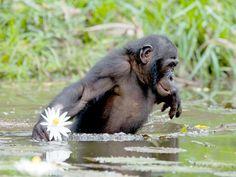 Chimpanzee Sanctuaries in India @ Sanctuariesindia.com