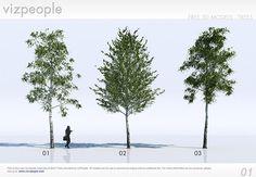 18 бесплатных 3D деревья / береза
