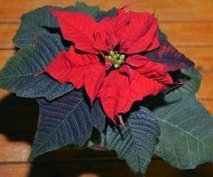Herb Garden, Herbs, Interiors, Plant, Herbs Garden, Herb, Medicinal Plants