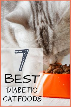 Cat Nutrition Diet Carlotta Cooper takes an in-depth look into the 7 Best Diabetic Cat Foods. She discusses what causes diabetes in cats while also giving 7 things to look for in a good diabetic cat food. What Causes Diabetes, Cure Diabetes, Diabetes Food, Diabetes In Cats, Diabetes Awareness, Diabetic Cat Food, Diabetic Recipes, Diabetic Living, Diabetes