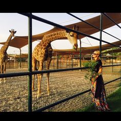 Time to play with some giraffes.